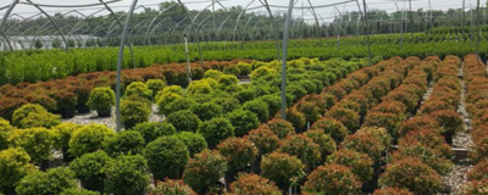 What Nurseries Need to Know About the Invasive Species Regulation