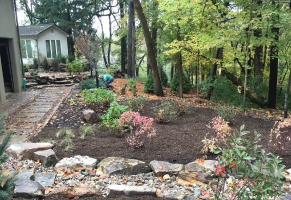 2017 Special Project: Native Restoration, The Turf Boss • Project: Private Residence, Indianapolis, IN