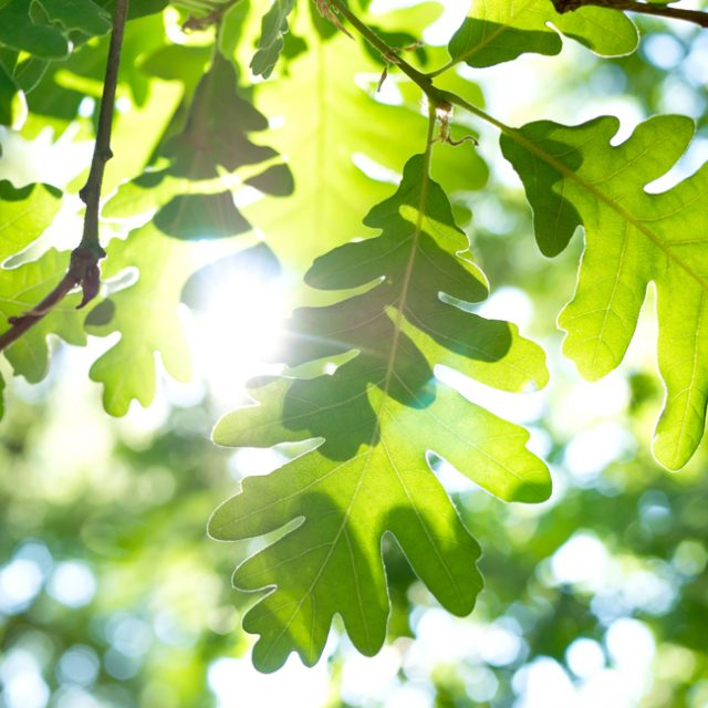 August is National Tree Check Month