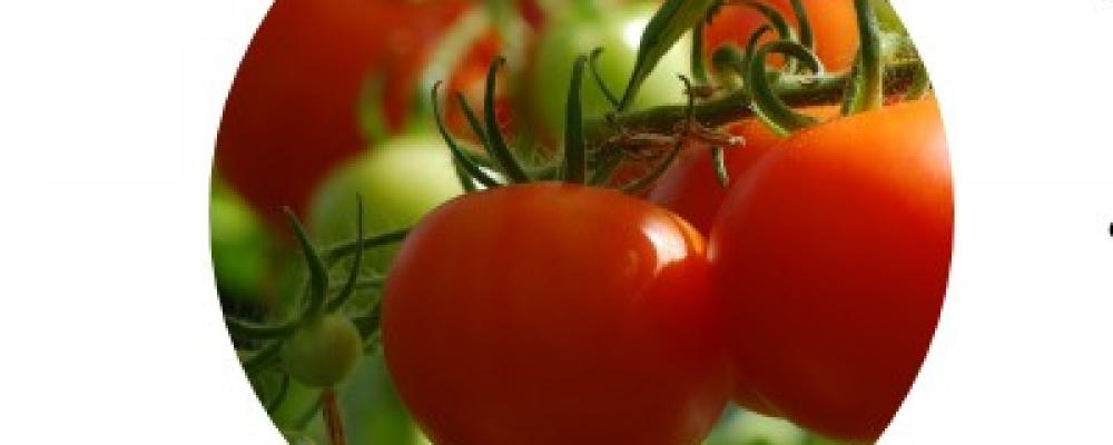 Grower Survey: Herbicide Drift