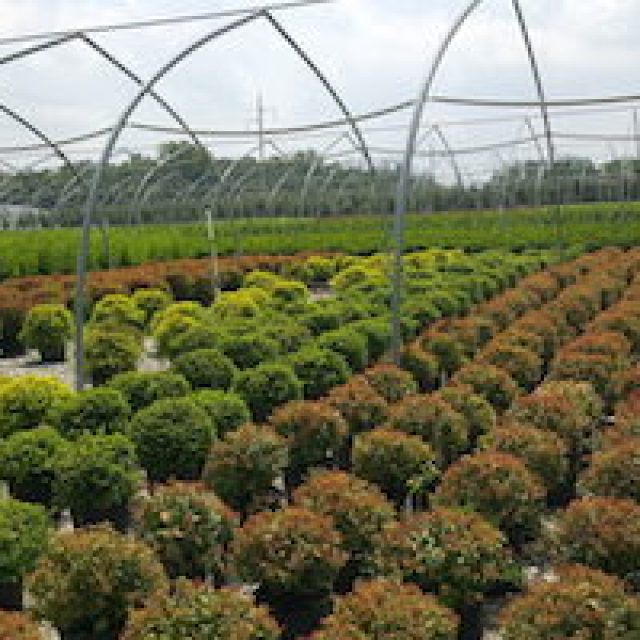 Green Industry Experiencing Reduced Plant Availability